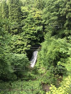 森の奥の滝の写真・画像素材[1411997]