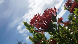 木の花の花瓶の写真・画像素材[1409792]