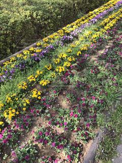 近くのフラワー ガーデンの写真・画像素材[1412033]