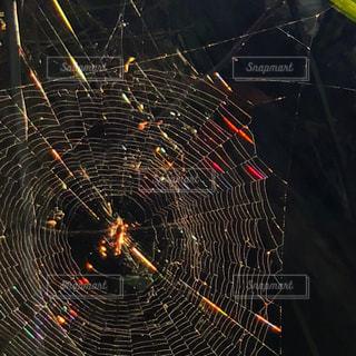 蜘蛛の巣の写真・画像素材[1410445]