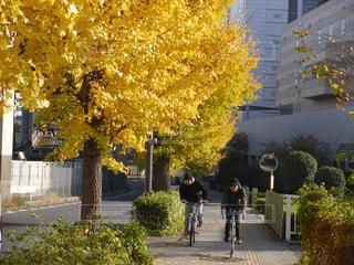 街路樹と秋の少年の写真・画像素材[1410636]