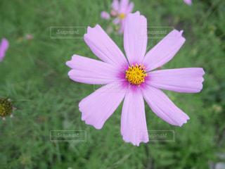 近くの花のアップの写真・画像素材[1431486]