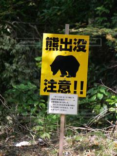 熊出没注意の写真・画像素材[1419740]