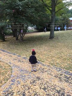 公園でフリスビーを投げる人の写真・画像素材[1412150]
