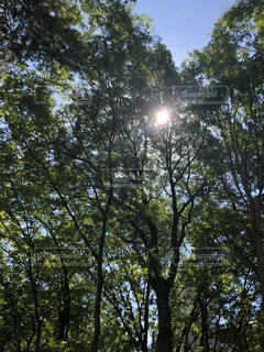 木漏れ日の写真・画像素材[1416458]