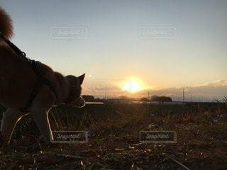 犬の写真・画像素材[44865]