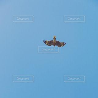 夏の鳥の写真・画像素材[1417881]