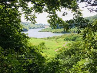森から覗くダム湖の写真・画像素材[1416266]