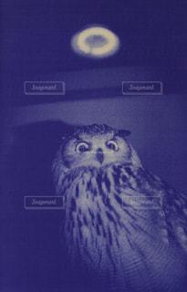 blue print 002の写真・画像素材[1415487]
