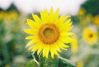 近くの花のアップの写真・画像素材[1415659]