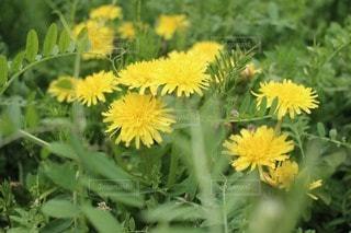 花の写真・画像素材[45034]