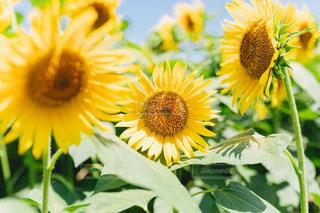 花の写真・画像素材[1417815]