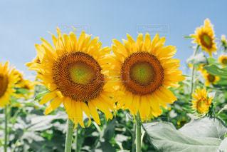 花の写真・画像素材[1417816]