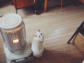ストーブで暖をとる猫の写真・画像素材[1419781]