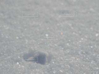 雪の輝きの写真・画像素材[1419791]