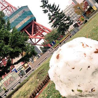 公園,雪だるま,札幌,大通公園,テレビ塔