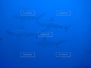 海の中を案内するのが私の仕事✨の写真・画像素材[1420689]