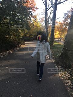 秋がきますよの写真・画像素材[1421651]