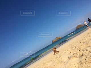 beach and dogの写真・画像素材[1426093]
