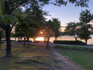 公園の夕日の写真・画像素材[1428222]