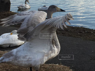 翼の写真・画像素材[1492304]