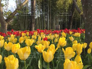 花の写真・画像素材[1495638]