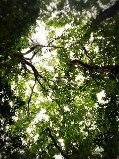 森で空を見上げての写真・画像素材[3415285]