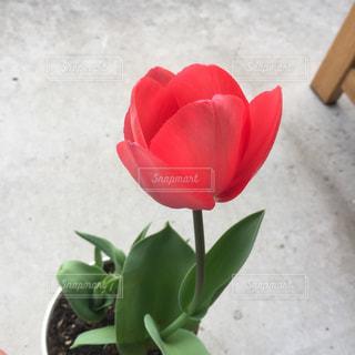 花の写真・画像素材[2155167]