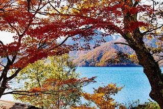 中禅寺湖の紅葉の写真・画像素材[1424991]