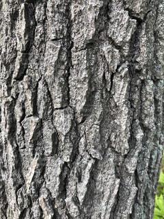 木のクローズアップの写真・画像素材[3131275]