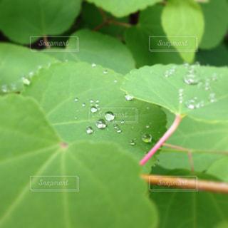 雨の写真・画像素材[1423733]