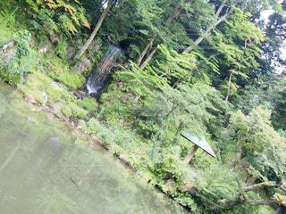緑豊かな池の写真・画像素材[1467633]
