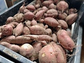 掘り立て安納芋の写真・画像素材[2676940]