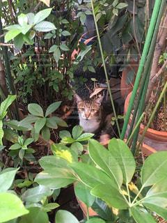 庭園の緑の植物の上に座っている猫の写真・画像素材[1426979]