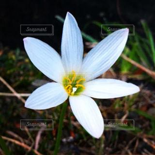 白い花の写真・画像素材[1493553]