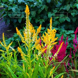花の写真・画像素材[1493559]