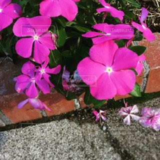 紫の花の写真・画像素材[1493561]
