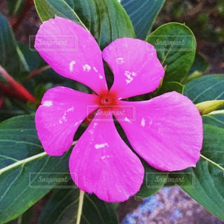 近くの花のアップの写真・画像素材[1510574]