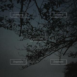 夜の枯木の写真・画像素材[1527785]