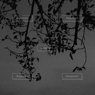 夜の枯木の写真・画像素材[1527786]