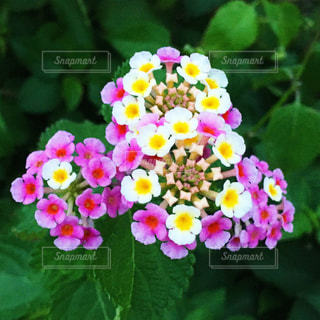 近くの花のアップの写真・画像素材[1530880]