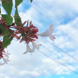 空と花の写真・画像素材[1624181]