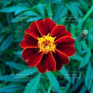 近くの花のアップの写真・画像素材[1627943]
