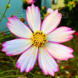 花のアップの写真・画像素材[1659877]