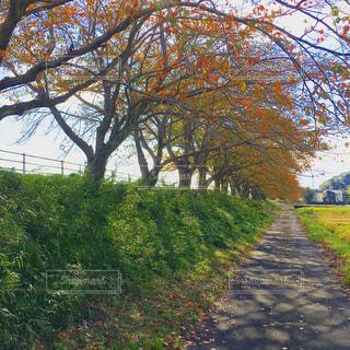 秋の小道の写真・画像素材[1677386]