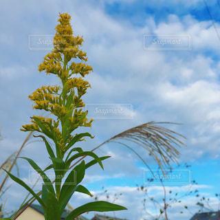 空と花の写真・画像素材[1678869]