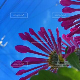 下から撮った花の写真・画像素材[1678870]