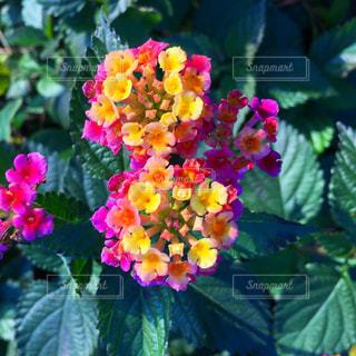 近くの花のアップの写真・画像素材[1682181]