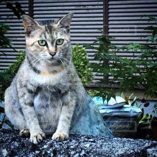 塀の上に座っている猫の写真・画像素材[1686557]
