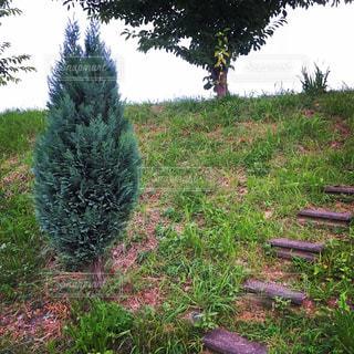 草と木の写真・画像素材[1694376]